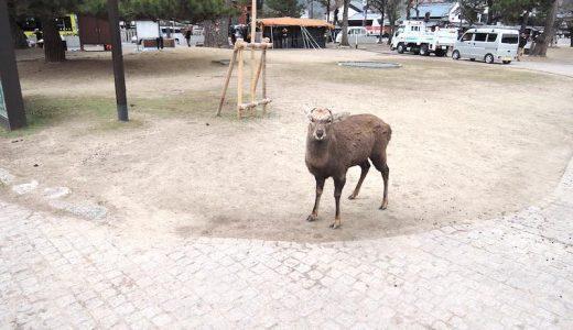 10年ぶりぐらいに奈良公園に行った