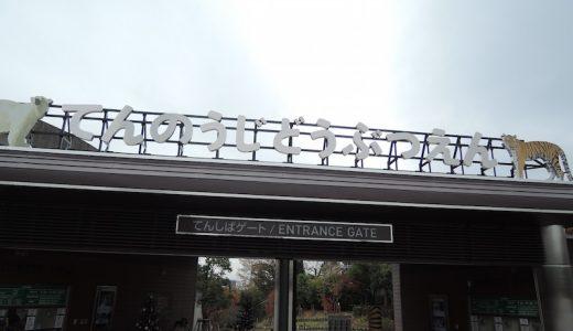 「天王寺動物園」に行った。めっちゃすいてた。